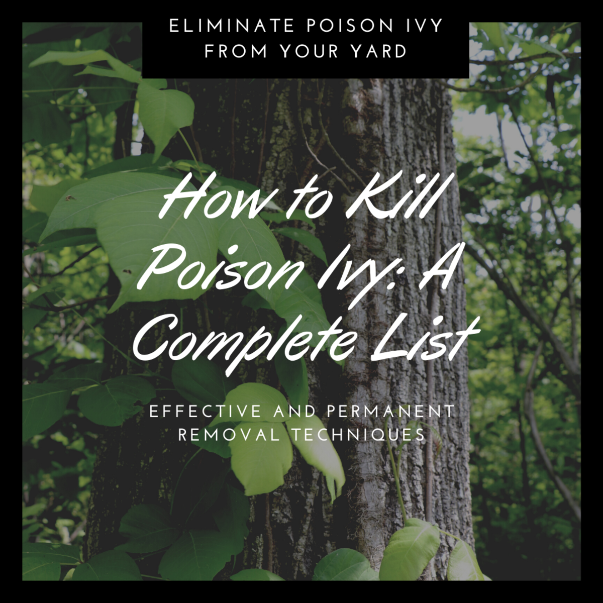 How to Kill Poison Ivy: A Complete List of Methods and Tips