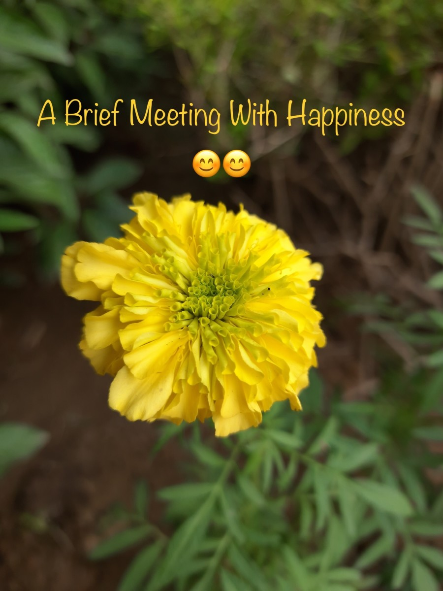 A Brief Meeting With Happiness