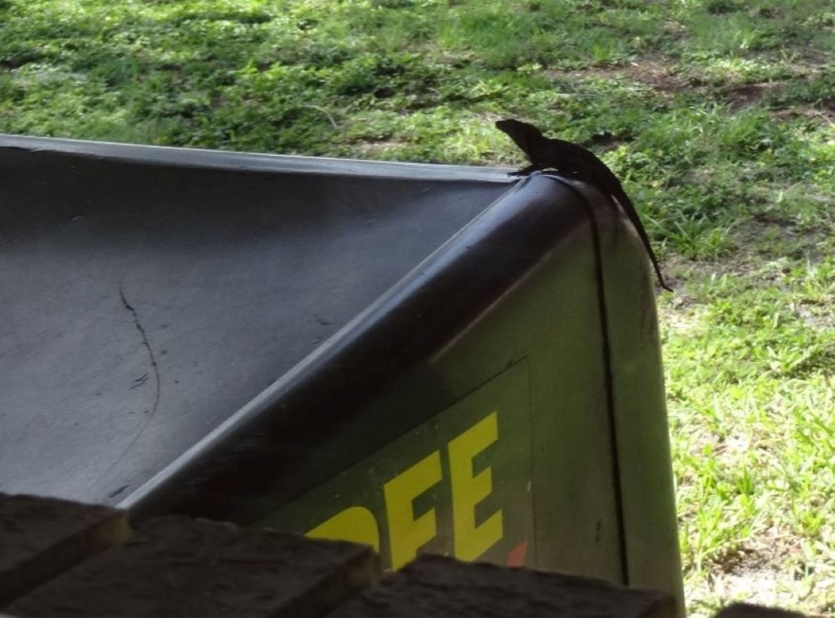 A lizard crept around outside the plate glass window, looking for his own breakfast.