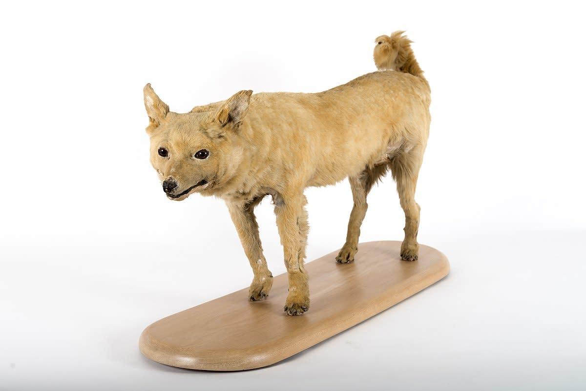 6-extinct-dog-breeds-youve-never-heard-before
