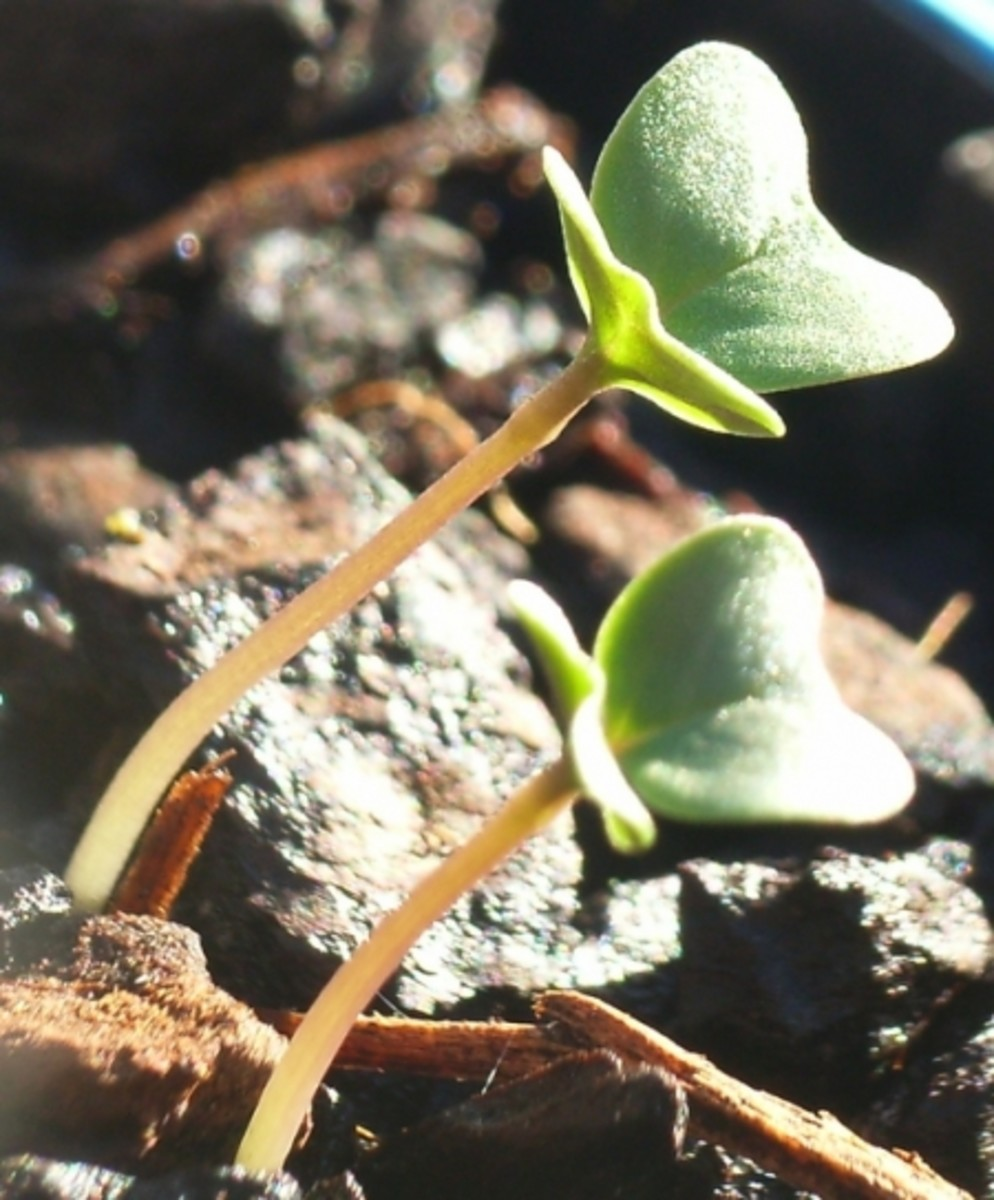 plant-growing-from-seed