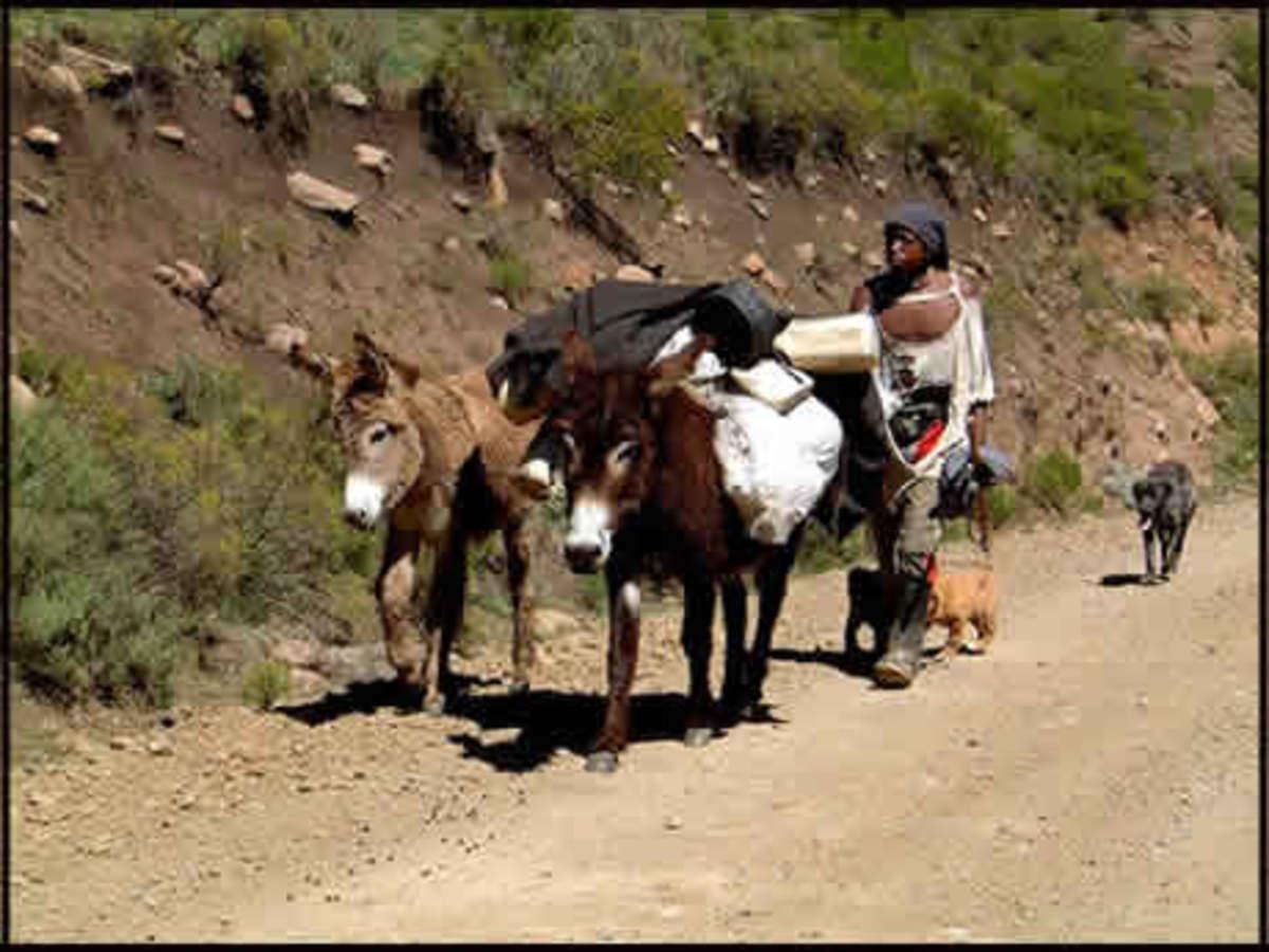 a BanTu herdsman