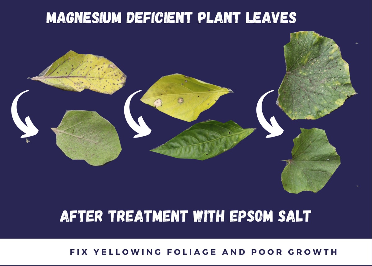 Certain types of leaf discoloration can indicate magnesium deficiency.