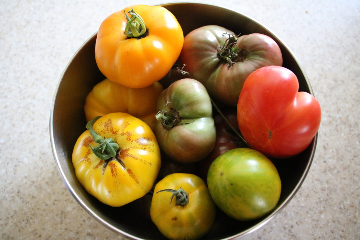 Properly balance nutrients, including calcium and magnesium, to grow the best tomatoes.