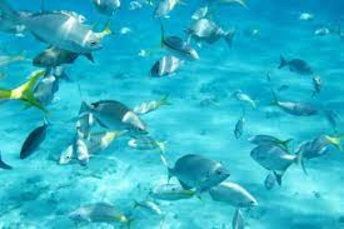 The Top 3 Snorkeling Spots in Florida