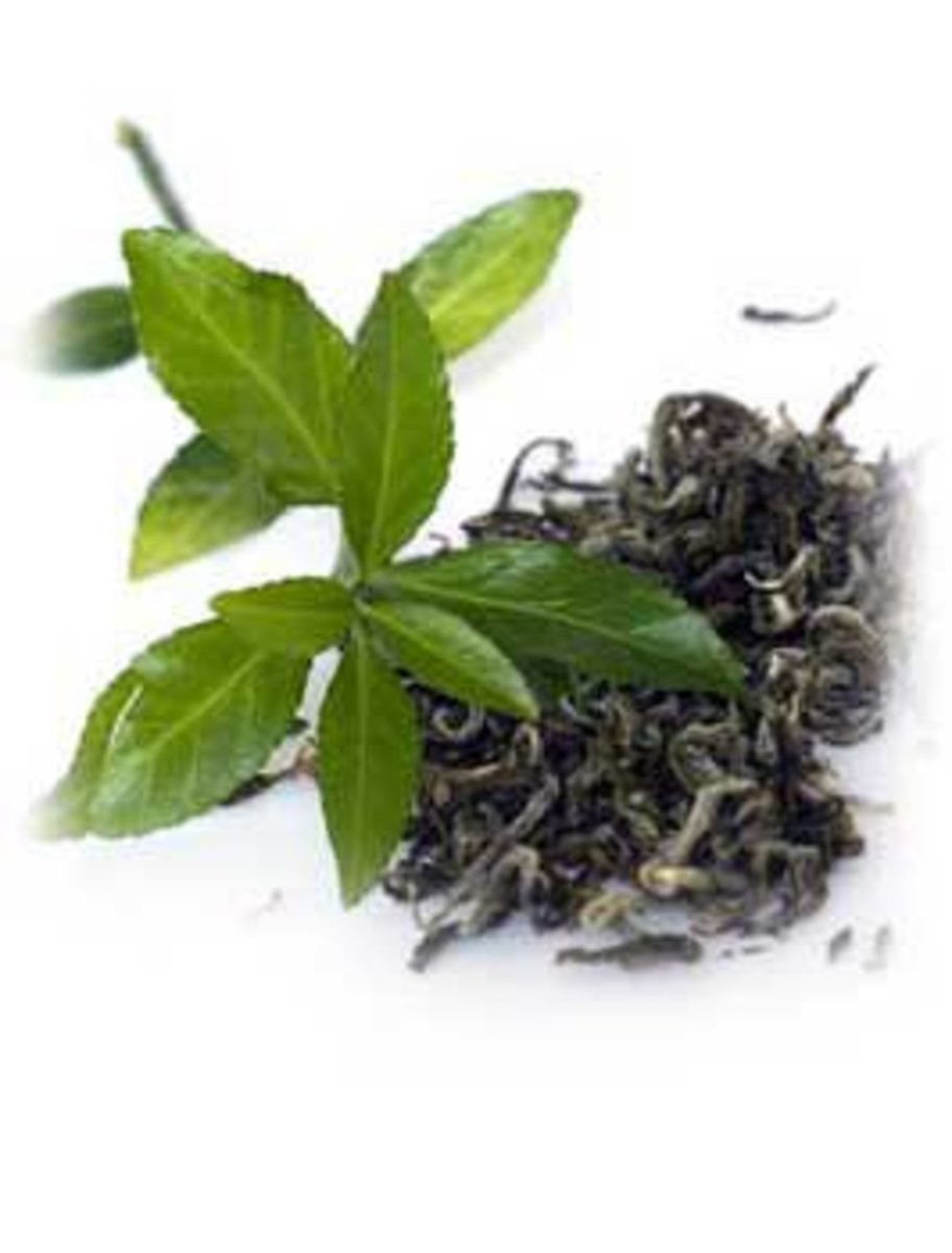 Leaf & Processed Green Tea Leaves