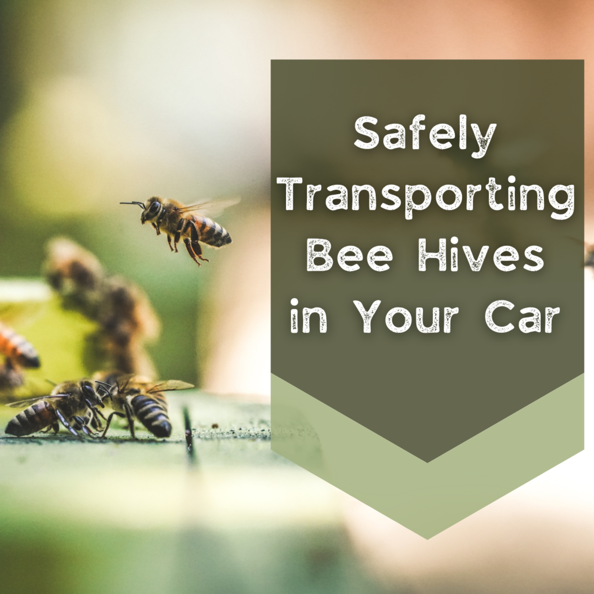 Learn how to safely and easily transport bees in your car