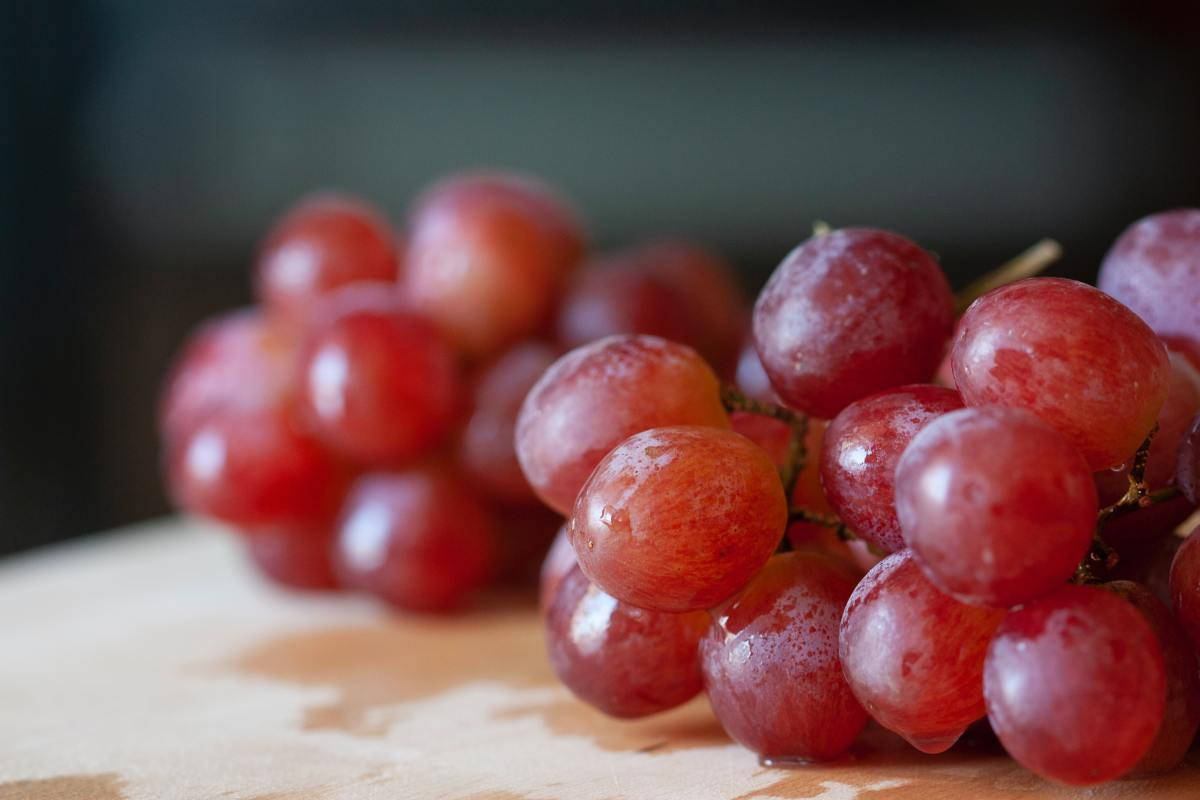 Grapes are toxic to dogs and should be avoided.