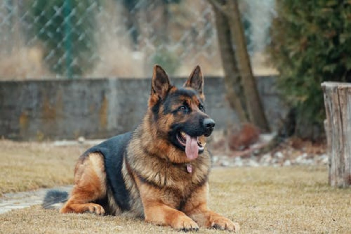 3-ways-to-train-a-dog-you-can-do