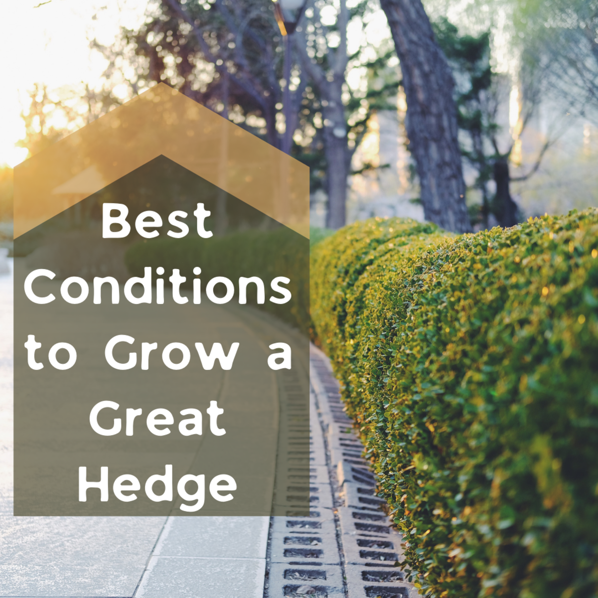 This article provides details on how to grow a flourishing hedge