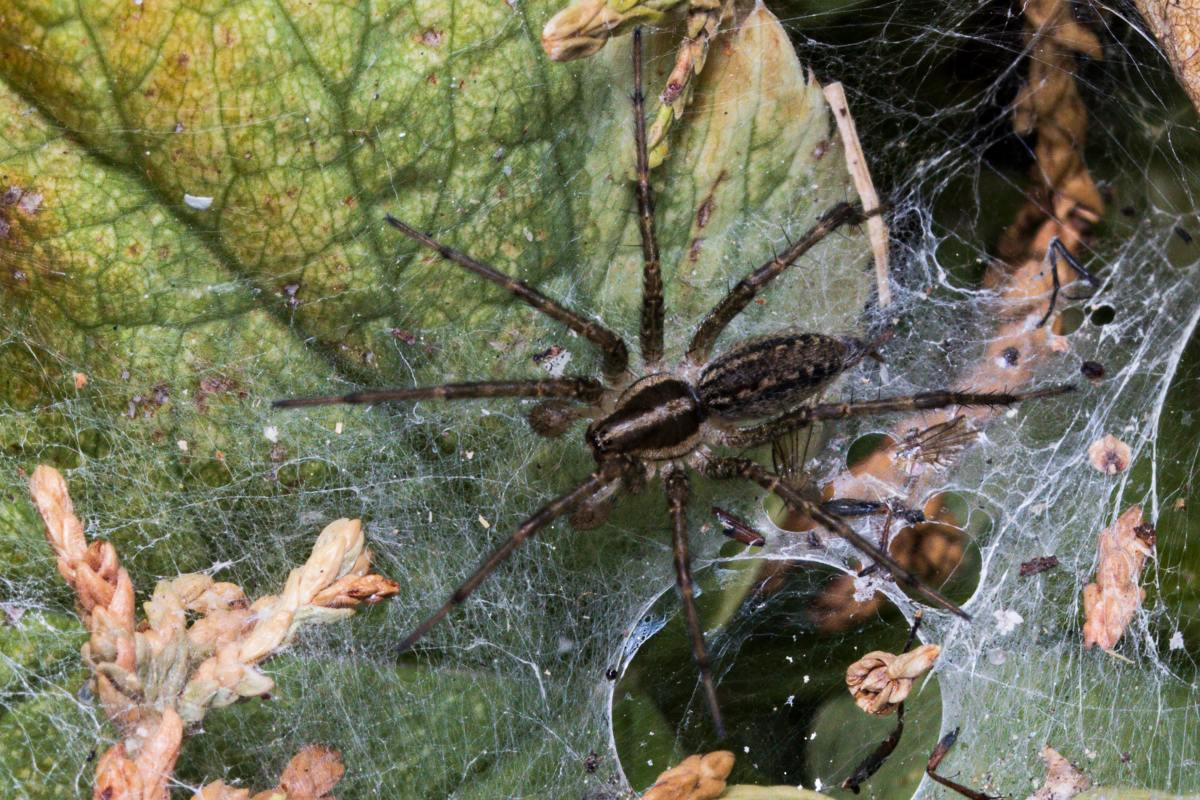 Should I Be Afraid of Wolf Spiders?