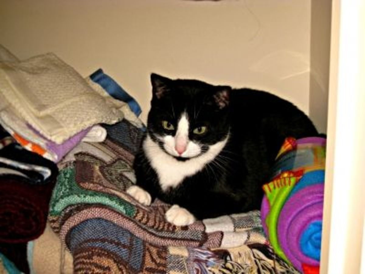 Tex loves to curl up in the linen closet!