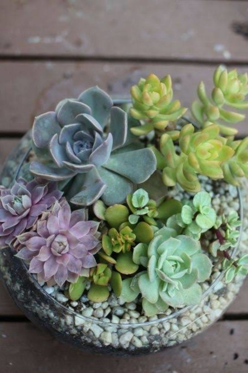 facts-that-you-must-know-about-succulent-plants