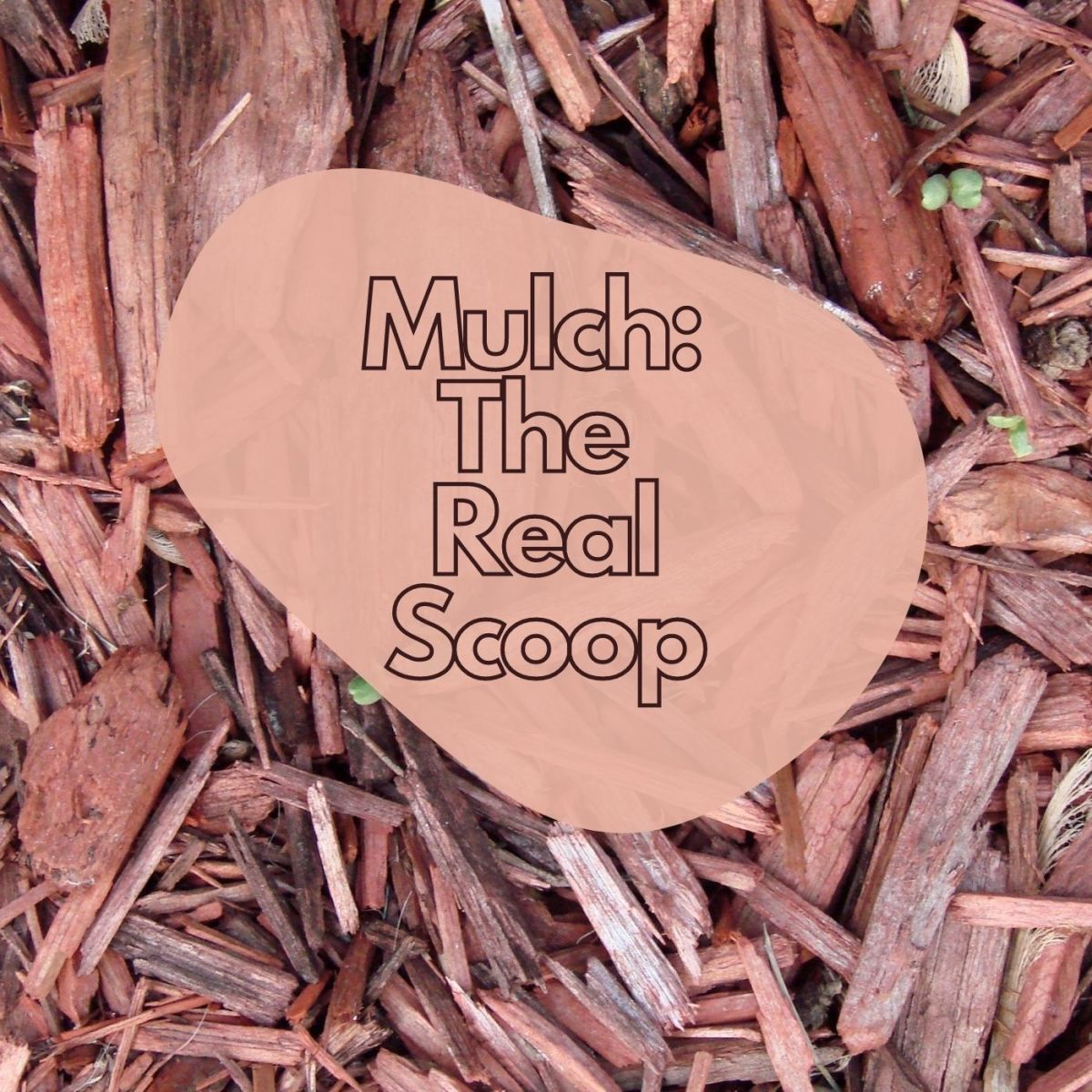 There is so much to learn about mulch!