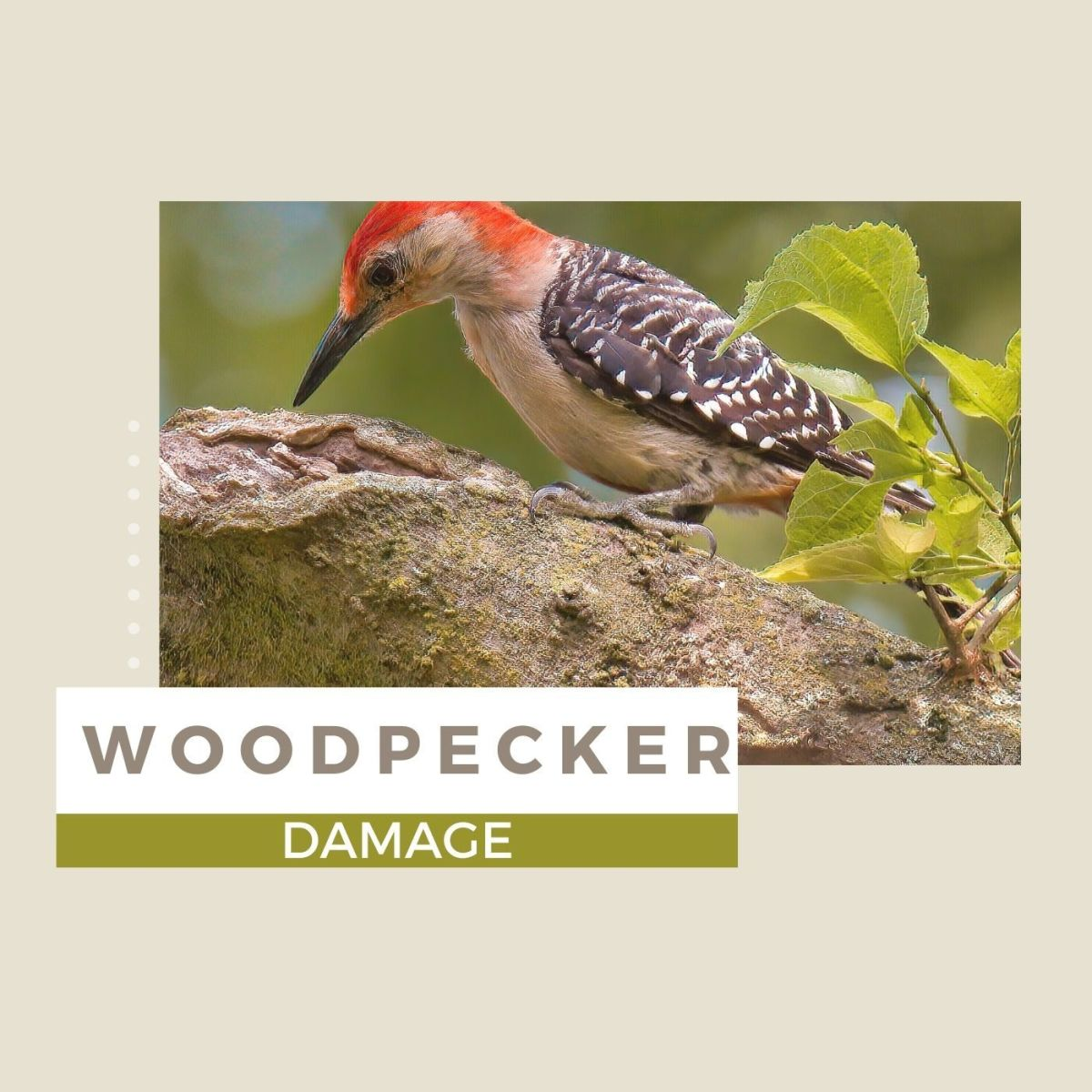 How to Fix and Prevent Woodpecker Damage
