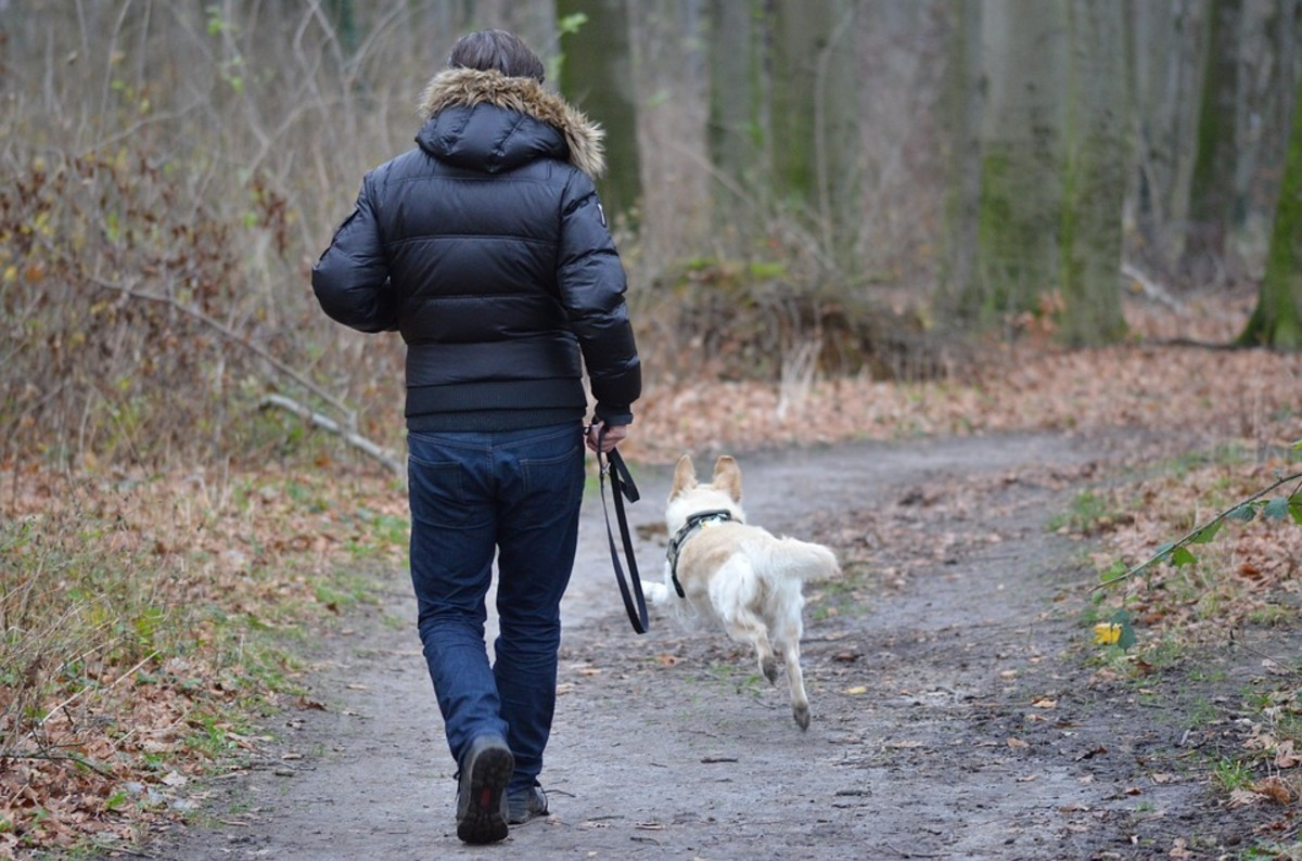 Nothing spoils a walk faster than wearing clothing that's too hot or cold. Make sure that your pet also has adequate protection during colder times.