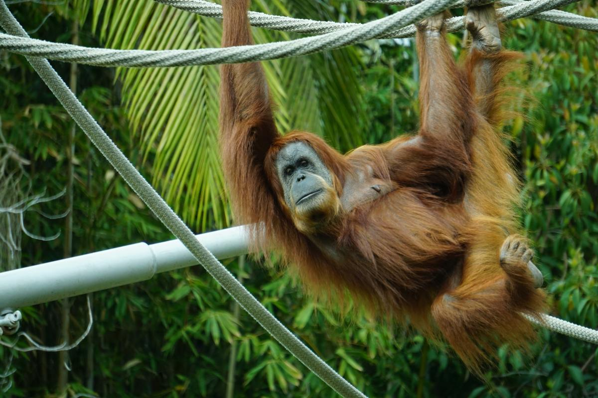 31-best-zoos-to-visit-in-the-united-states