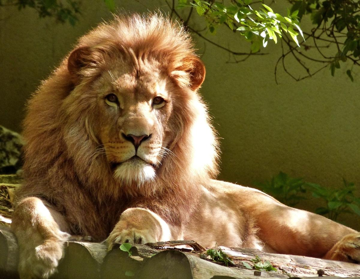 Good zoos focus on animal conservation and welfare.