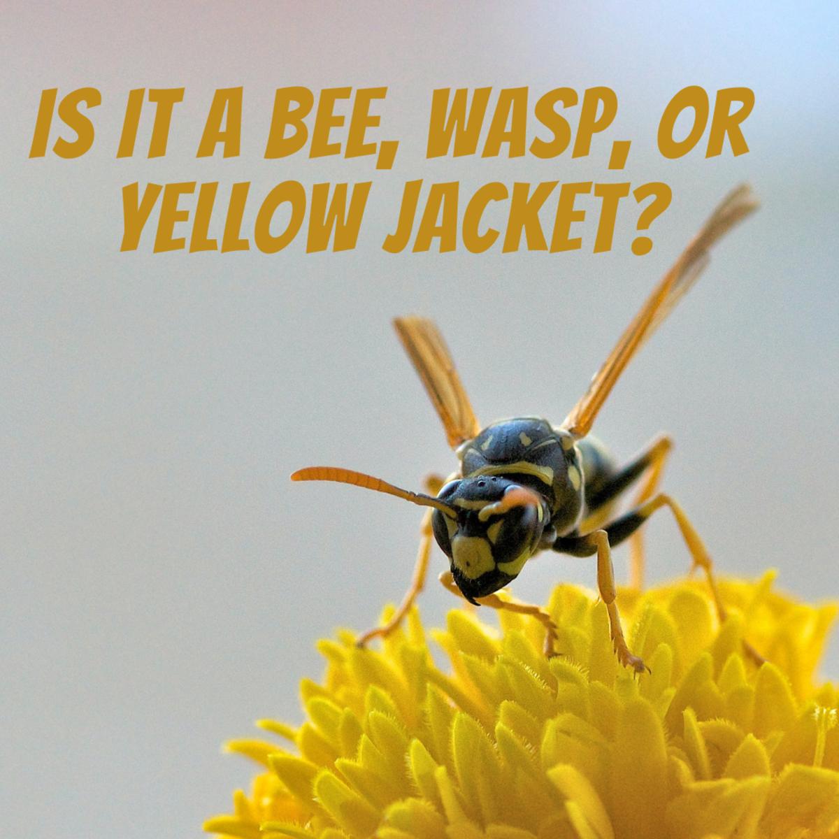 Bee, Wasp, or Yellow Jacket?