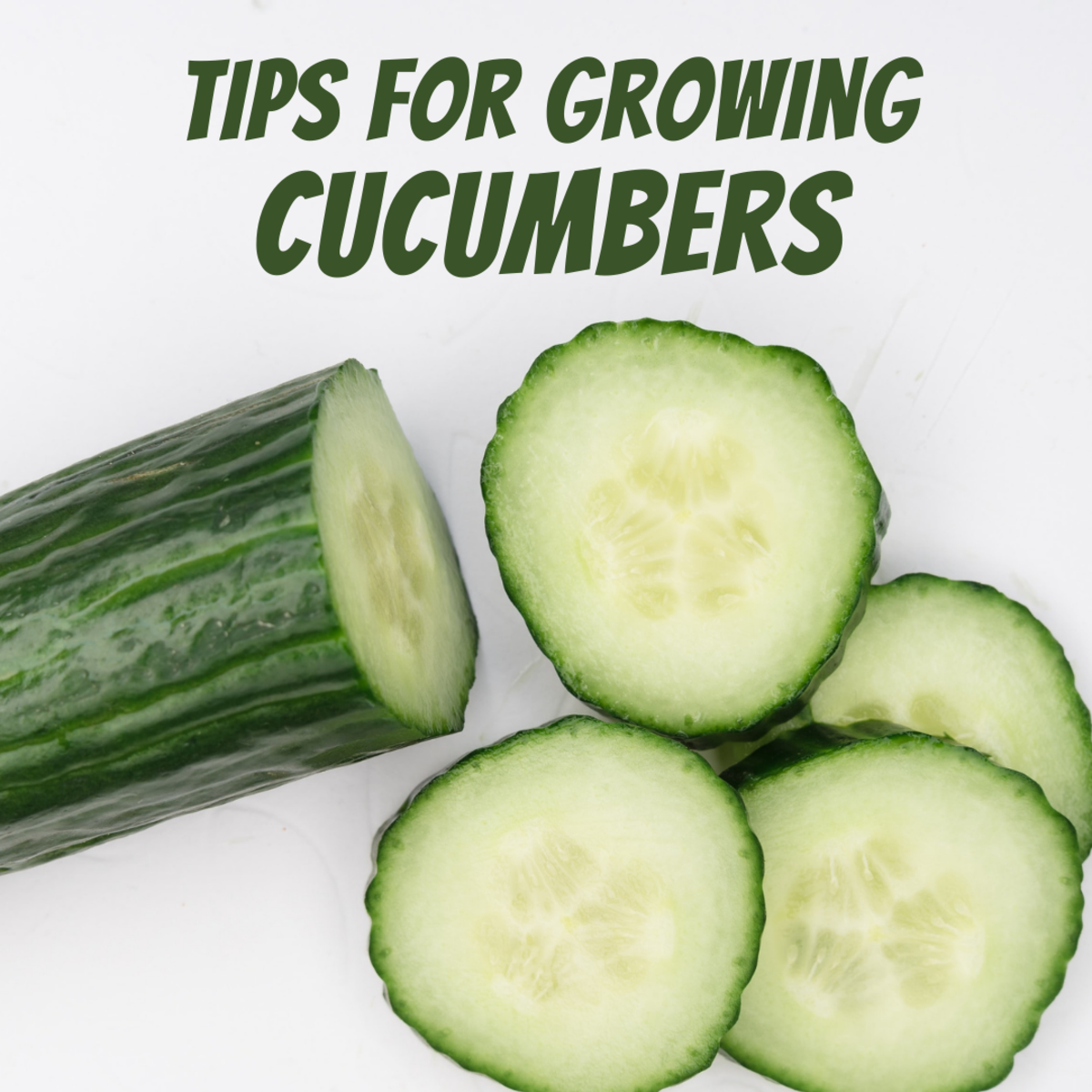 Tips and tricks for growing cucumbers