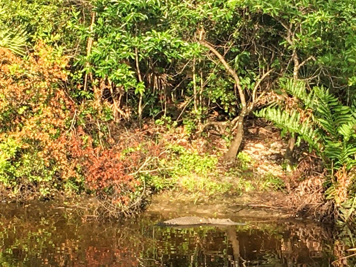 Halpatiokee Regional Park in Stuart, Florida