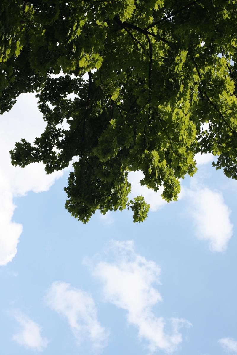 Oak trees are so beautiful.