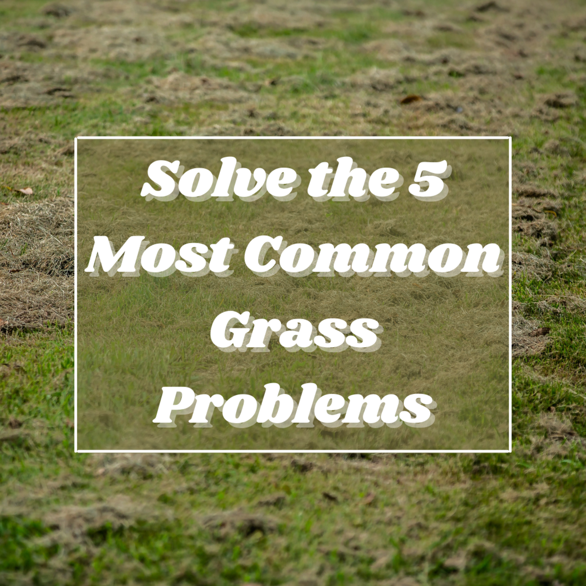 Learn about the 5 most common issues people have with their grass, and find out how to revive your fading lawn