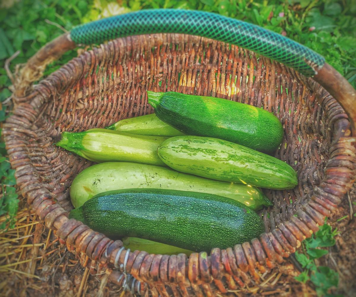Celebrate National Sneak Some Zucchini Onto Your Neighbor's Porch Day