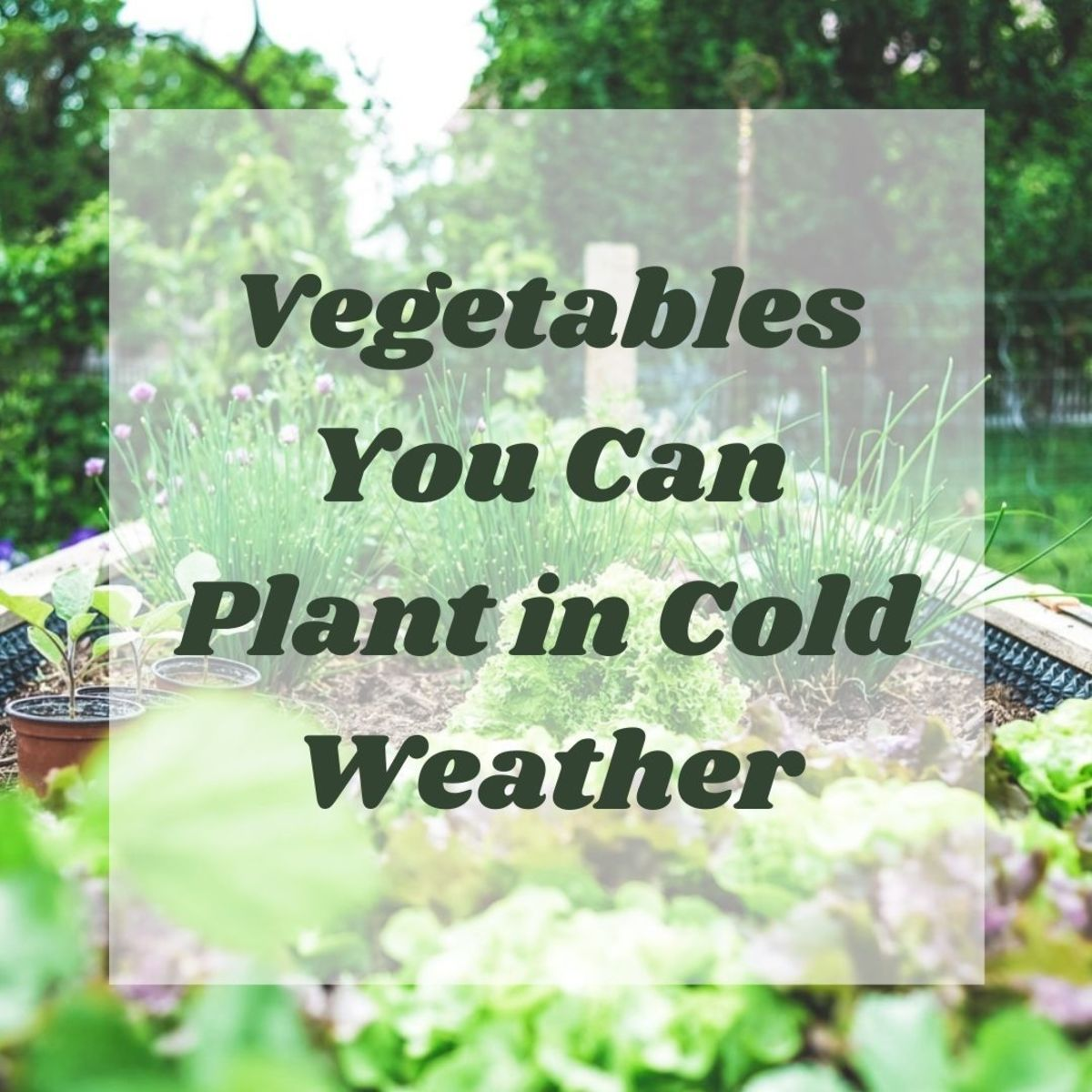 Vegetables to Plant in the Cold Fall and Winter