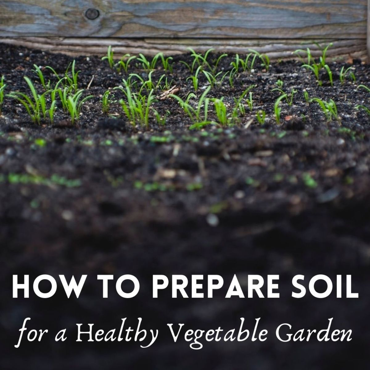 How to Prepare Soil for Planting and Growing a Healthy Vegetable Garden
