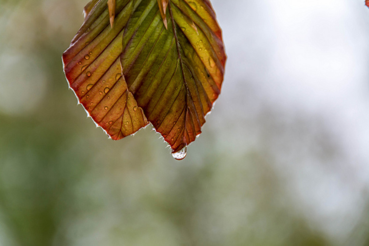 a-dramatic-poem-raindrops