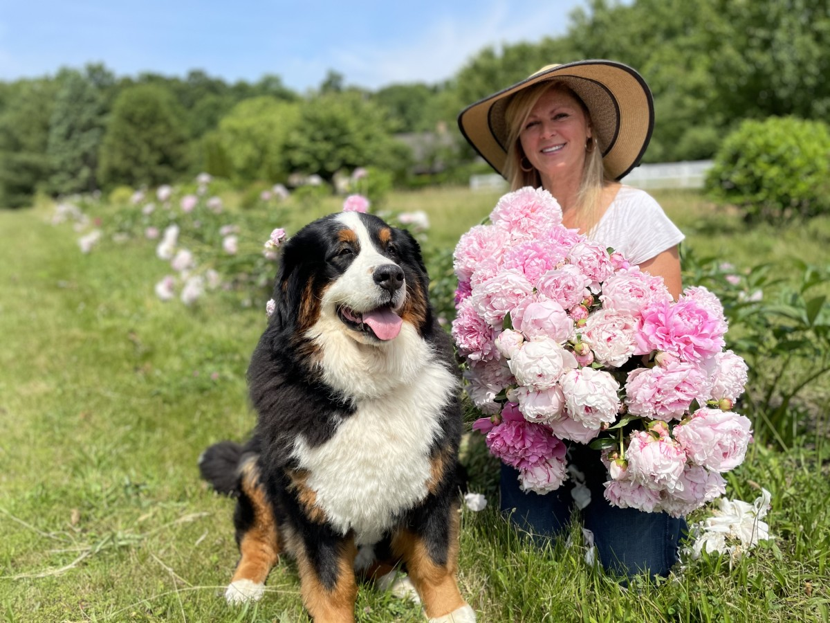 Me and Lucy with some freshly harvested peonies. You can see blooms in various stages, here, from the marshmallow stage to the full-blown bloom stage.