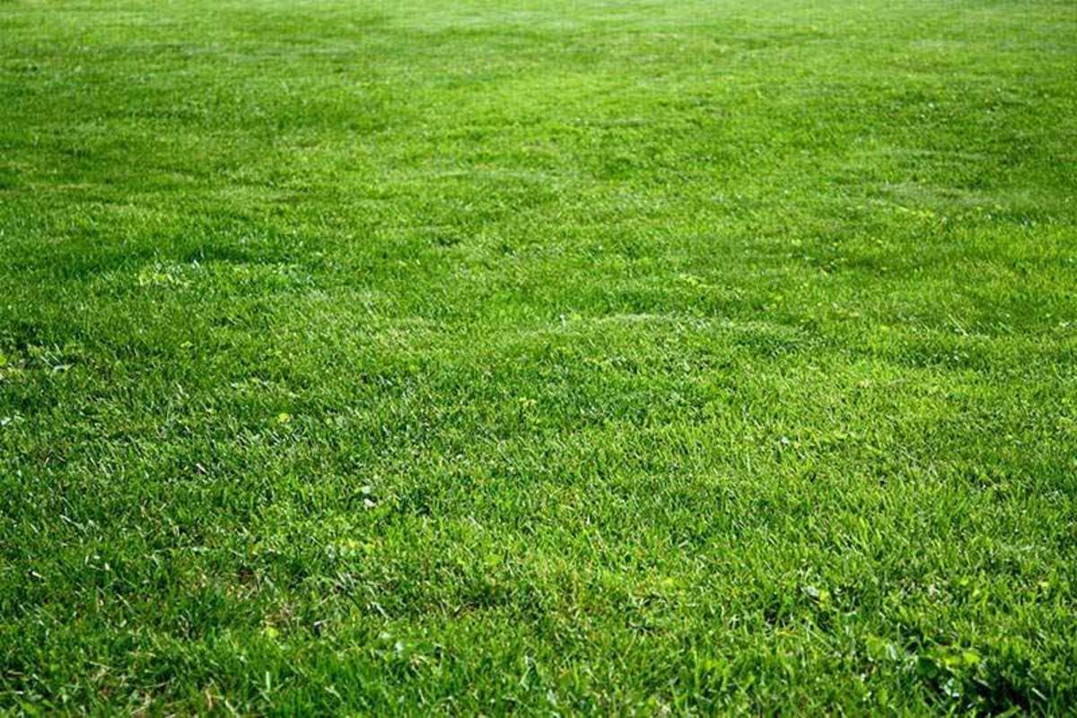 Kentucky bluegrass is a perfect choice for the state of Ohio.  Planting cool-season grass seed in early fall or spring helps to ensure a lush, green carpet of sod.