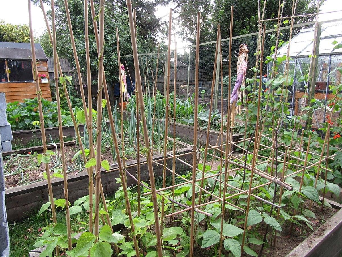 Bamboo trellises for various vegetables.