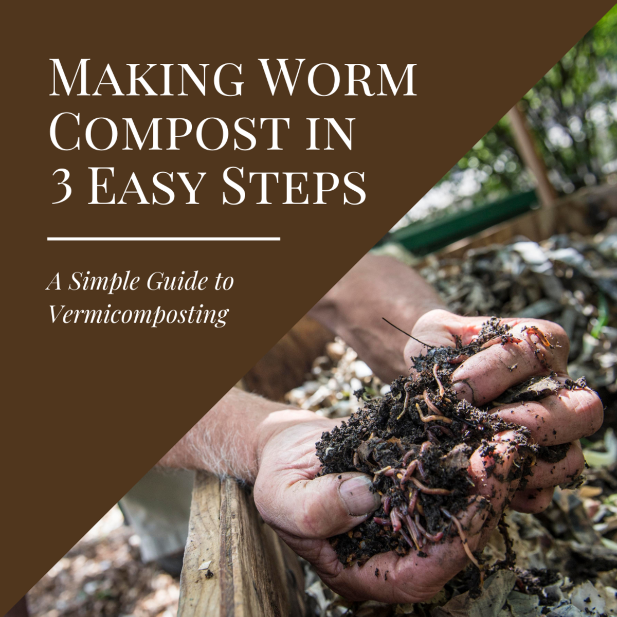 This article will show you how to start worm composting in three easy and simple steps.