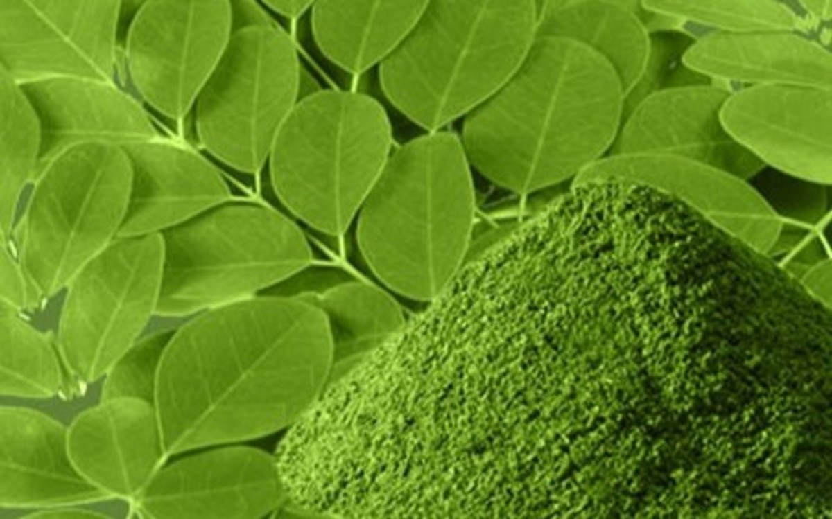 Moringa leaf powder is widely known for its amazing medicinal properties