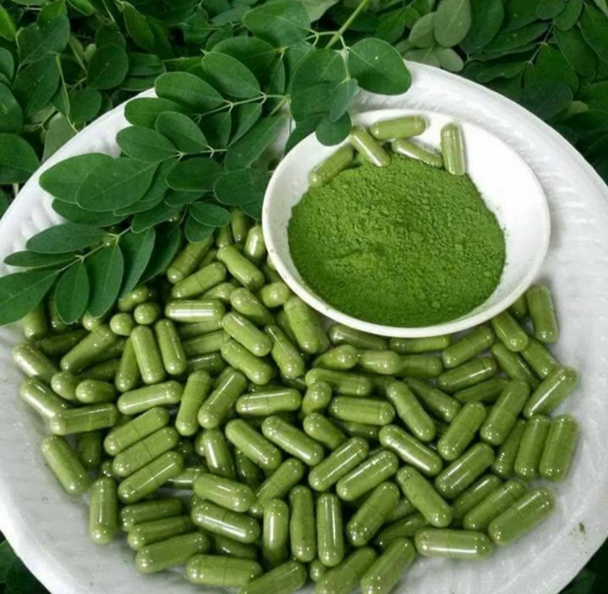 Moringa leaf powder is consumed as nutritional supplement