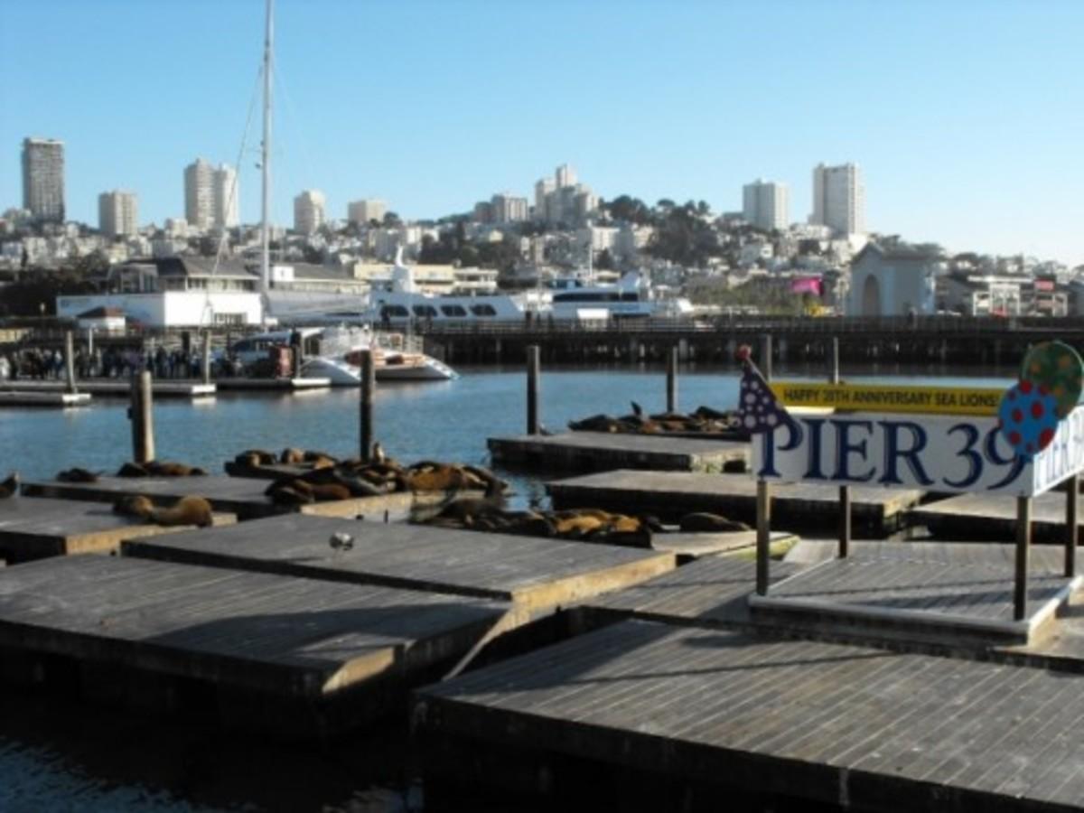 Twenty years in residence. Catamaran Tours offered.