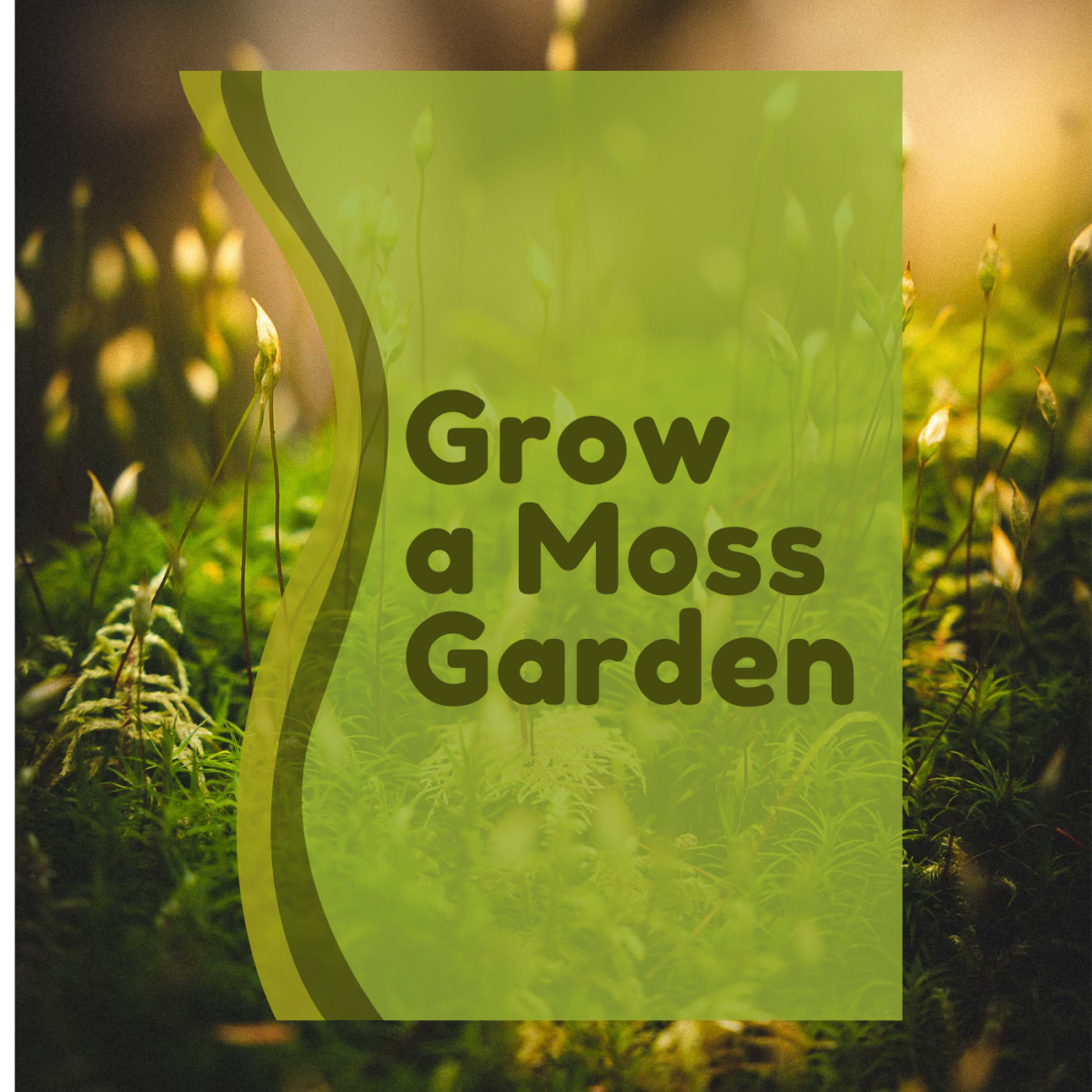 Learn how to propagate a moss garden.