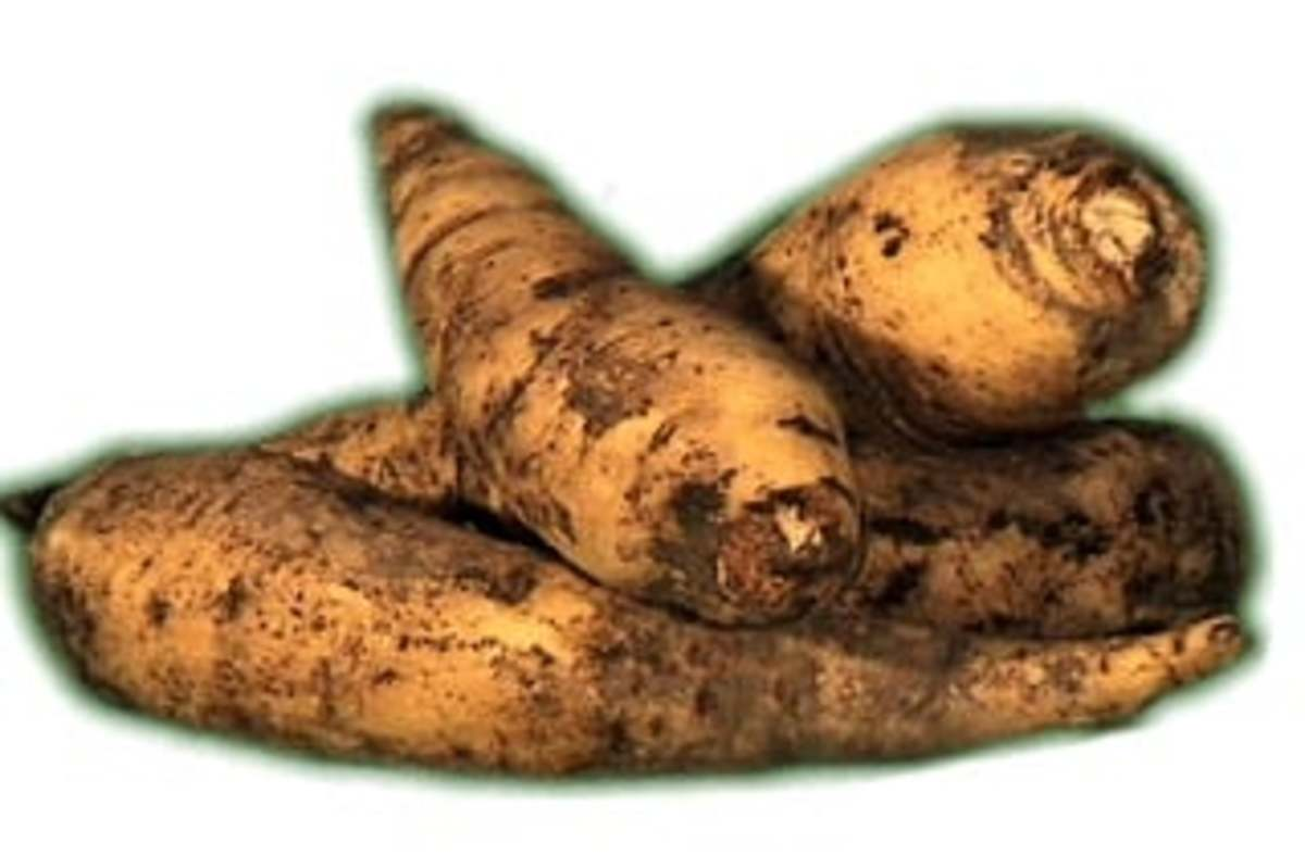 Arracacha, a carrot-like vegetable from the Andes