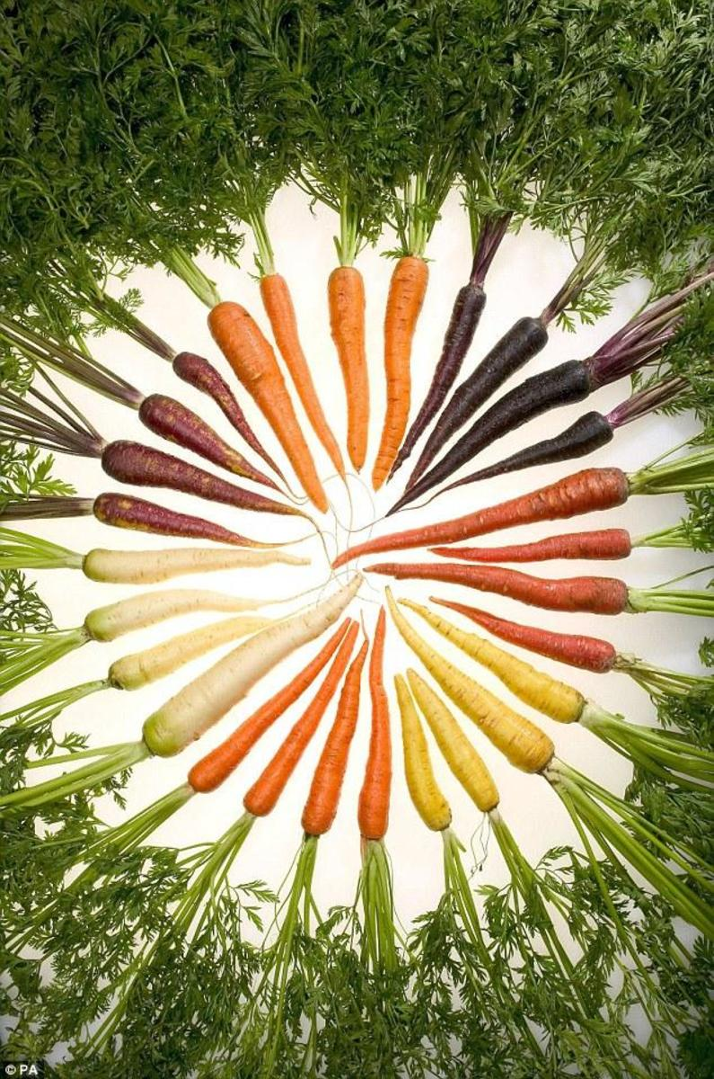 The carrot rainbow