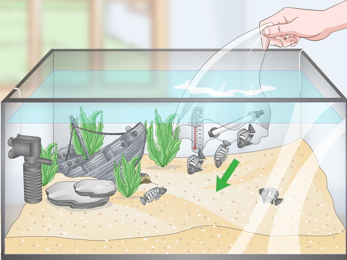 how-to-us-rock-wood-and-gravel-for-a-home-aquarium
