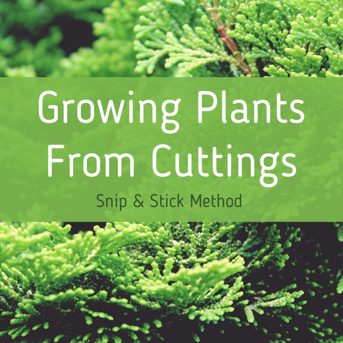 Propagate your plants to grow new ones—for free! Learn about this easy method.