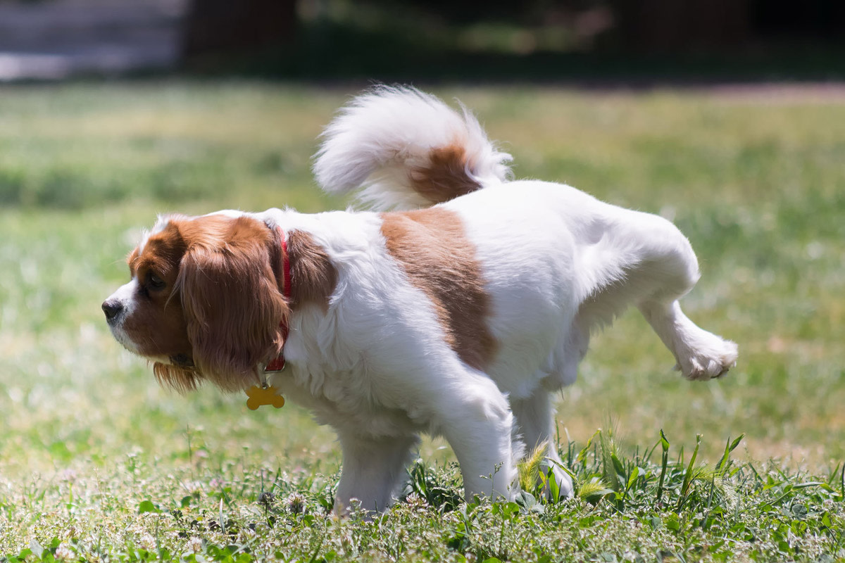 most-common-dog-health-issues-and-diseases