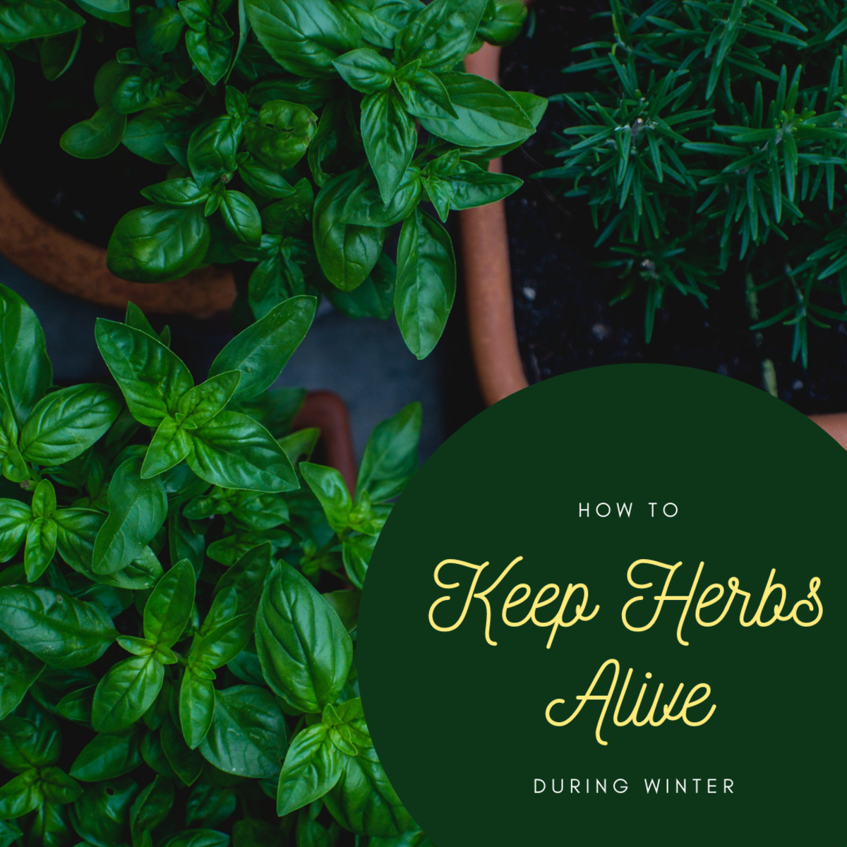 You don't have to say goodbye to your herbs just because winter has arrived.