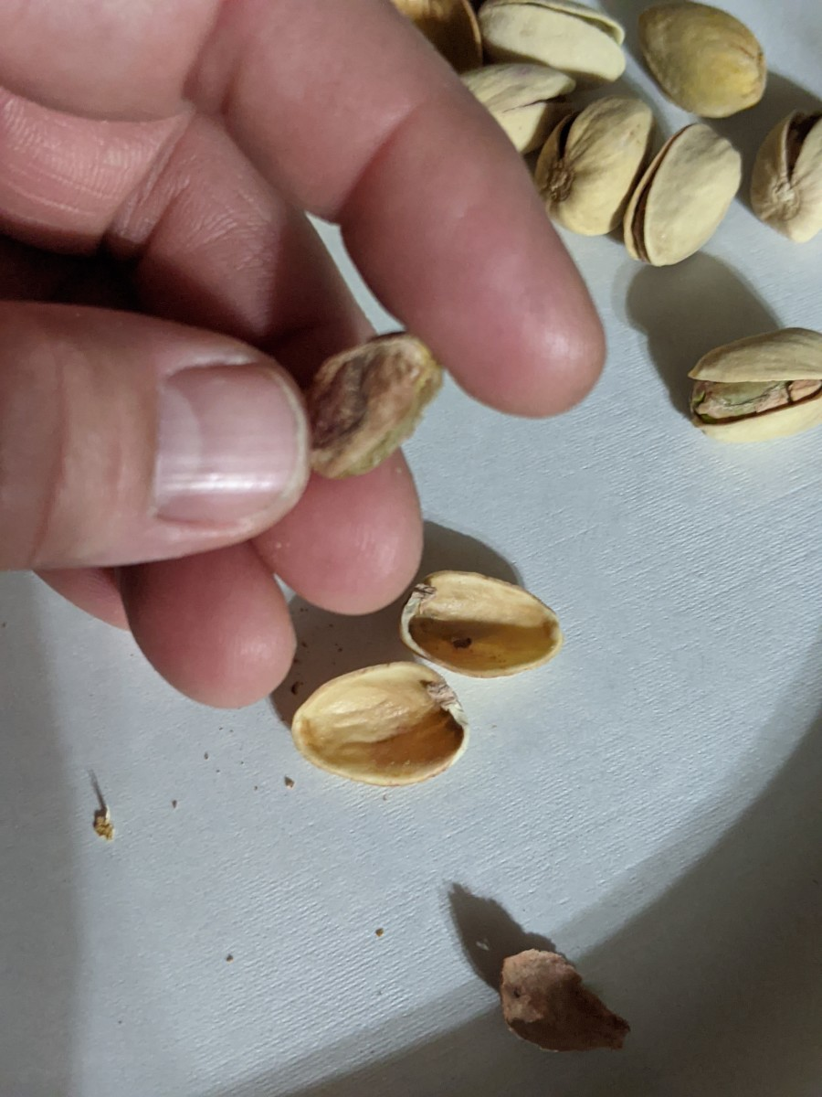 pistachio-nuts-are-my-favorite