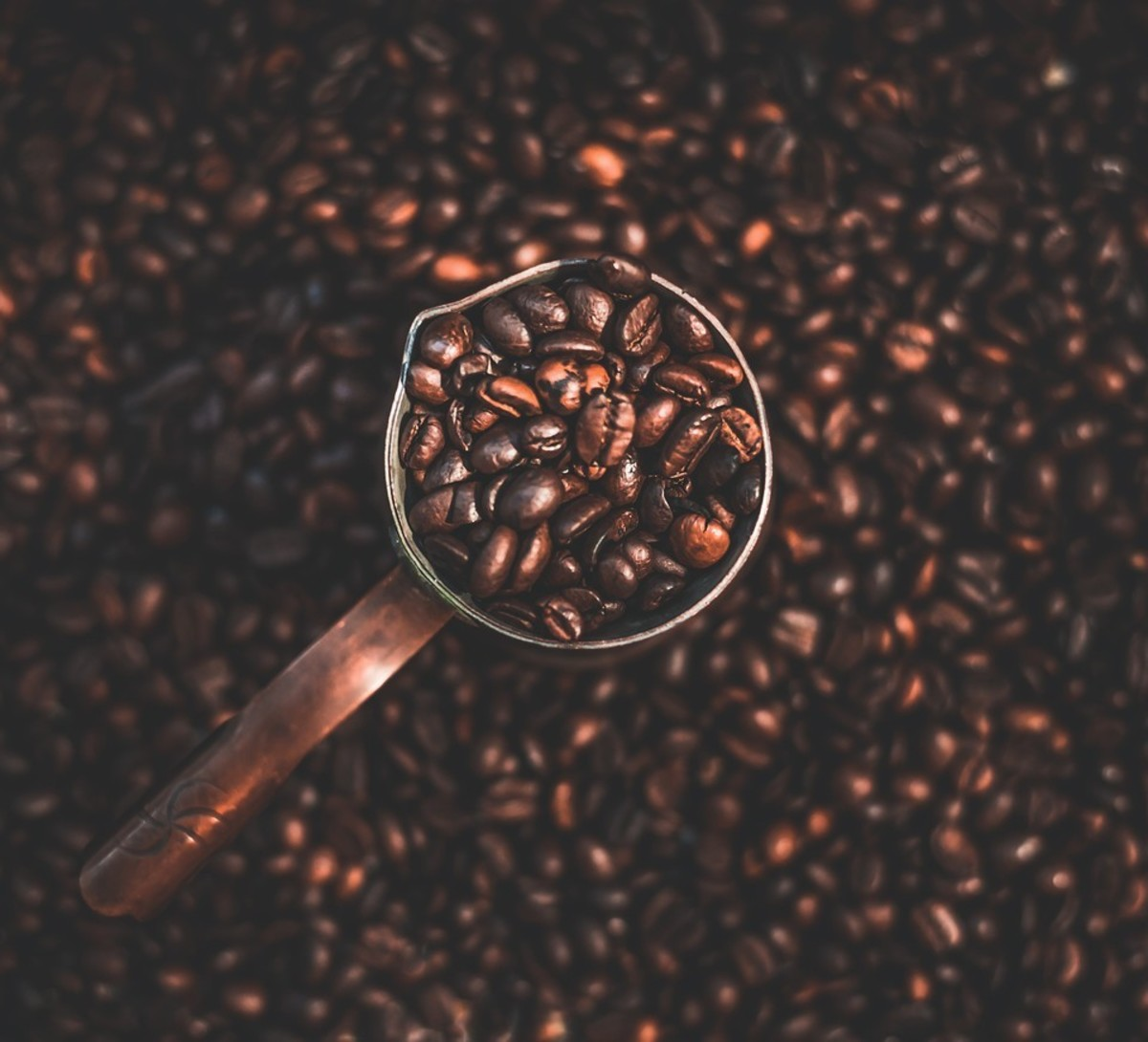 A coffee bean is actually a seed. When dried, roasted and ground, it's used to brew coffee.