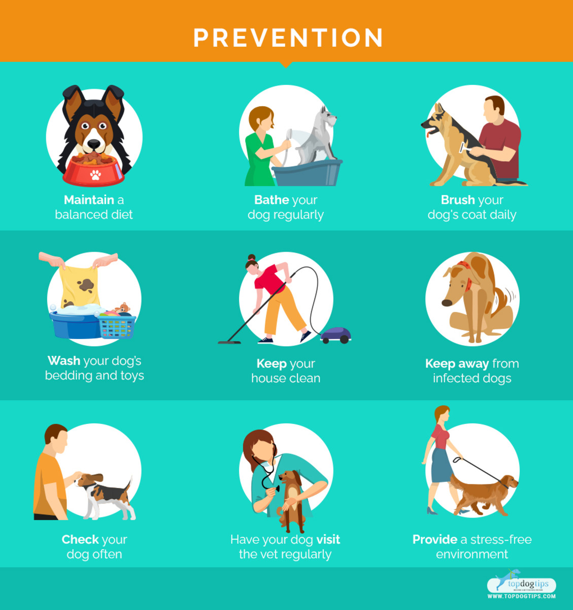 common-skin-diseases-in-older-dogs-and-how-to-prevent-them