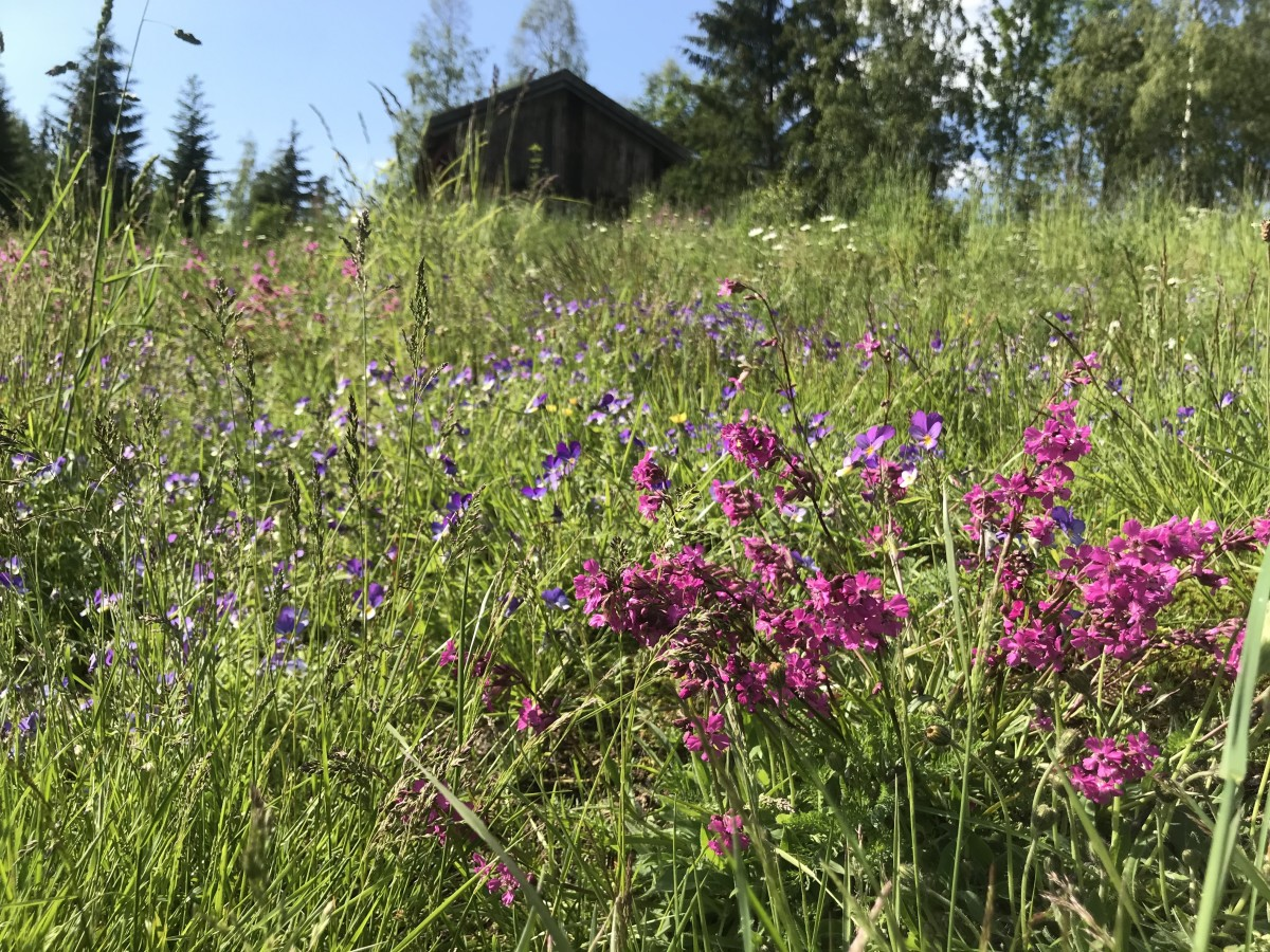 Our wildflower meadow hums with life all summer long.
