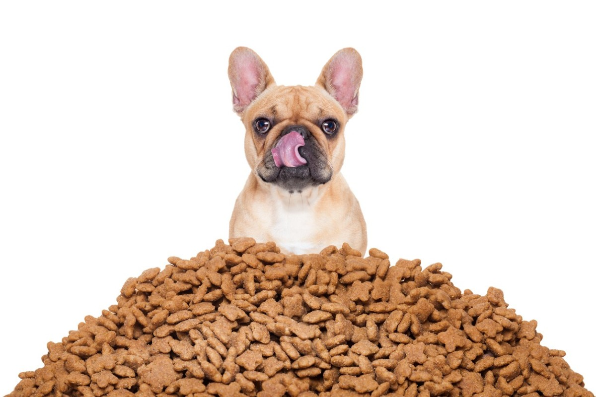 choose-the-right-dog-food